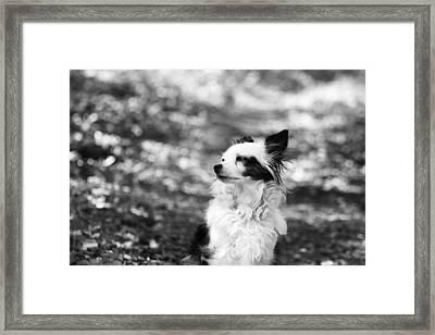 My Dog Framed Print by Daniel Precht