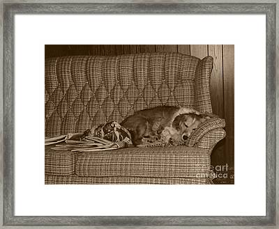 My Dog Sleeping On The Couch Circa 1976 Framed Print by ImagesAsArt Photos And Graphics