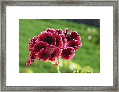 Framed Print featuring the photograph My Edges Are Pink by Lew Davis