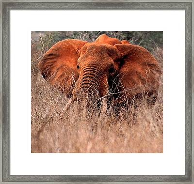 My Elephant In Africa Framed Print