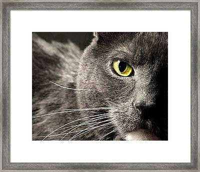 My Eye's On You Framed Print by Diana Angstadt