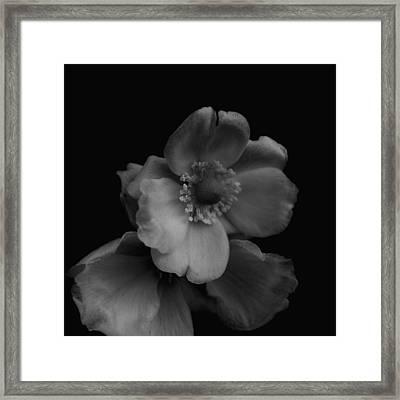 My Fair Lady Framed Print by Rachel Mirror