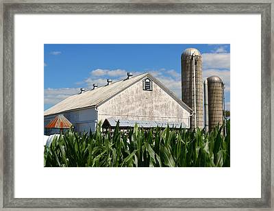 My Favorite Barn In Summer Framed Print