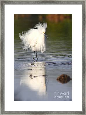 Framed Print featuring the photograph My Feathers Are All Poofy by Ruth Jolly