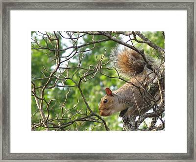 My First American Squirrel Framed Print