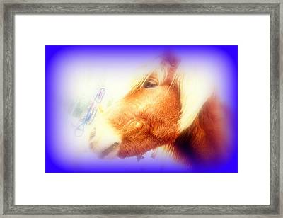 My First Love Was A Simple Horse  Framed Print by Hilde Widerberg