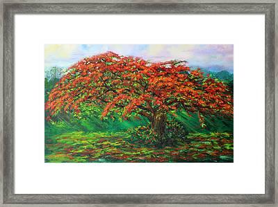 My Flamboyant Tree Framed Print by Estela Robles Galiano