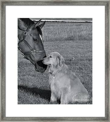 Framed Print featuring the photograph My Friend by Barbara Dudley