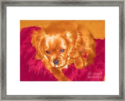 My Friend Copper The King Charles Spaniel Puppy Framed Print by Jonathan Steward