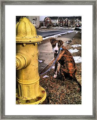 Framed Print featuring the photograph My Friend Plug by Robert McCubbin
