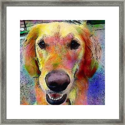 My Friends Dog #portrait #dogportrait Framed Print