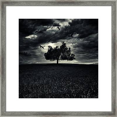 My Friends Framed Print by Stelios Kleanthous