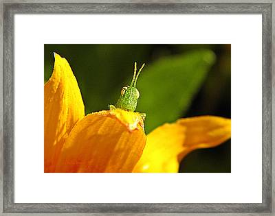 My Full Attention  Framed Print by Chris Berry