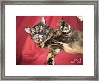 My Funny Cat Framed Print
