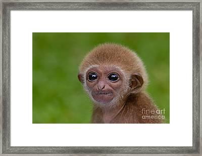 My Furry Little Friend Framed Print