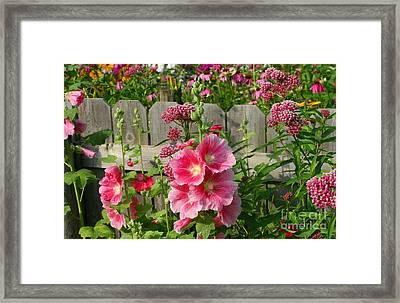 My Garden 2011 Framed Print by Steve Augustin