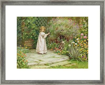 My Garden Framed Print by William Ashburner