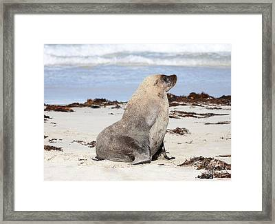 My Good Side Framed Print by Mike Dawson