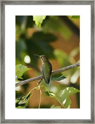 My Green Colored Hummingbird 4 Framed Print