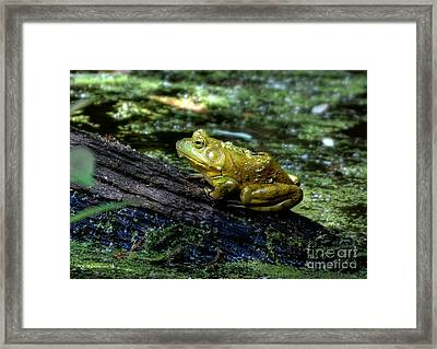 My Handsome Prince Framed Print by Kathy Baccari