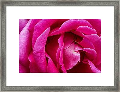 My Last Rose Framed Print by Kenneth Feliciano