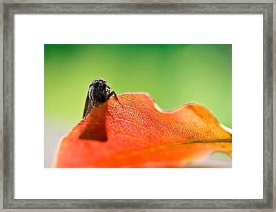 My Leaf Framed Print by Shane Holsclaw