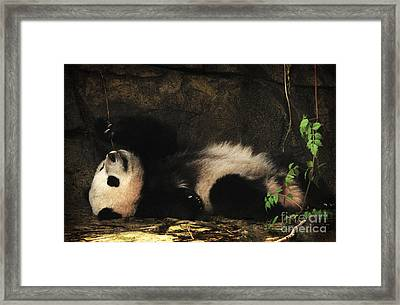 My Life In The Grotto Framed Print by Olivia Hardwicke