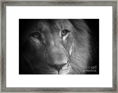 My Lion Eyes Framed Print by Thomas Woolworth