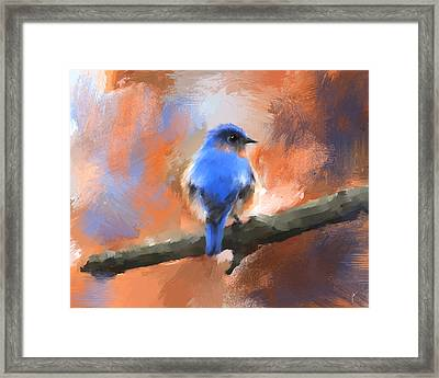 My Little Bluebird Framed Print