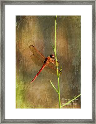 My Little Red Friend Framed Print by Deborah Benoit