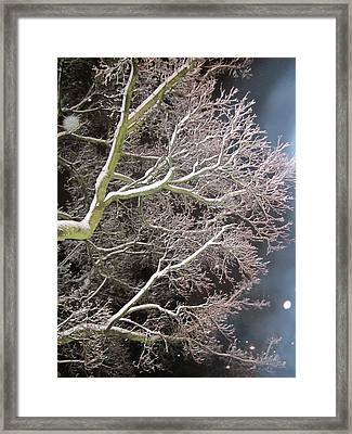 My Magic Tree Framed Print