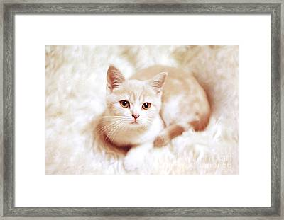 My Master Framed Print by Aiolos Greek Collections