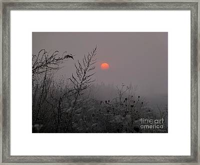 My Misty Morning Framed Print