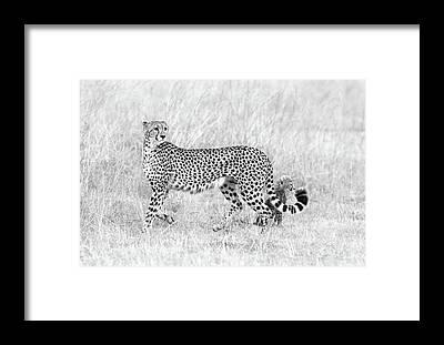 Camouflage Framed Prints