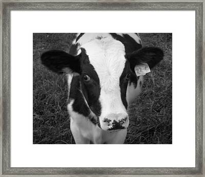 My Name Is Cow - Black And White Framed Print by Joseph Skompski
