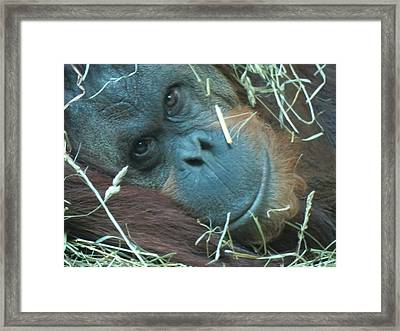 My Name Is Iris Framed Print by Feva  Fotos