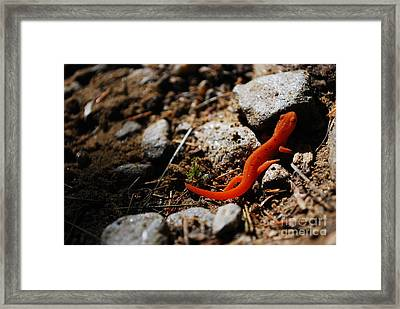 My Name Is Ned The Newt Framed Print by Susan Hernandez