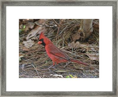 My Name Is Red Framed Print
