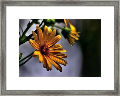 My Only Sunshine Framed Print
