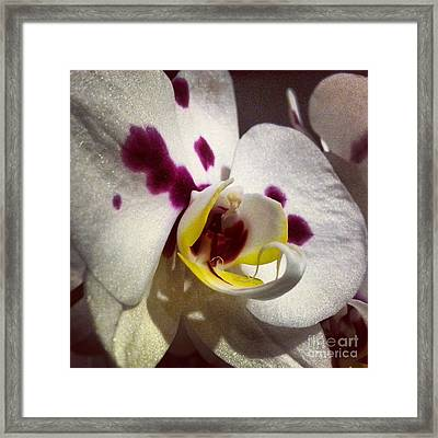 My Orchid Framed Print by Heather L Wright