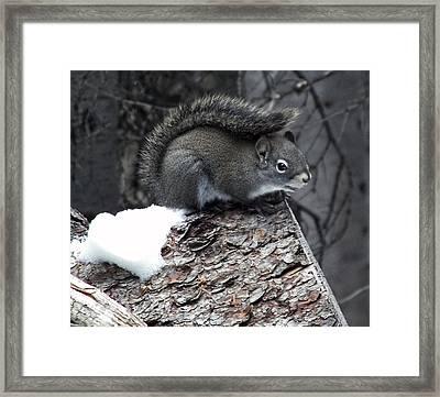 My Own Fur Wrap Framed Print