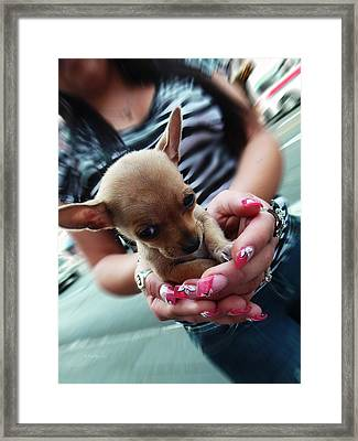 My Palm Sweetheart Framed Print by Xueling Zou
