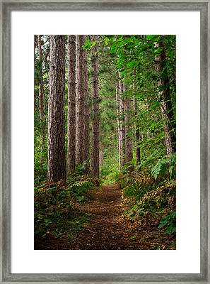 My Path Framed Print