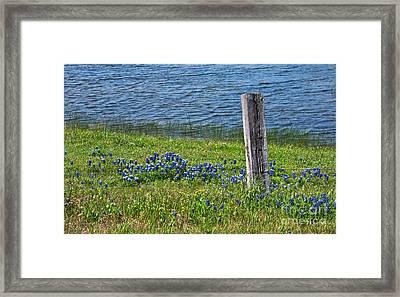 My Peace Framed Print by Lisa Holmgreen