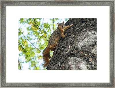 My Peanut Framed Print by Robert Bales