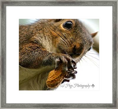 My Peanut Treat  Framed Print by Peggy Bordelon