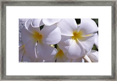 My Plumeria  Framed Print by Gornganogphatchara Kalapun