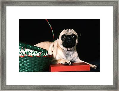 My Present Framed Print by Elizabeth Eldridge