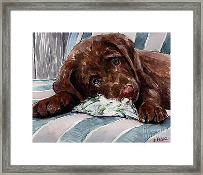 My Rope Toy Framed Print by Molly Poole