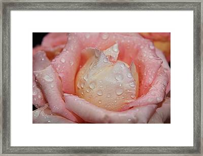 My Rose Bloom Framed Print